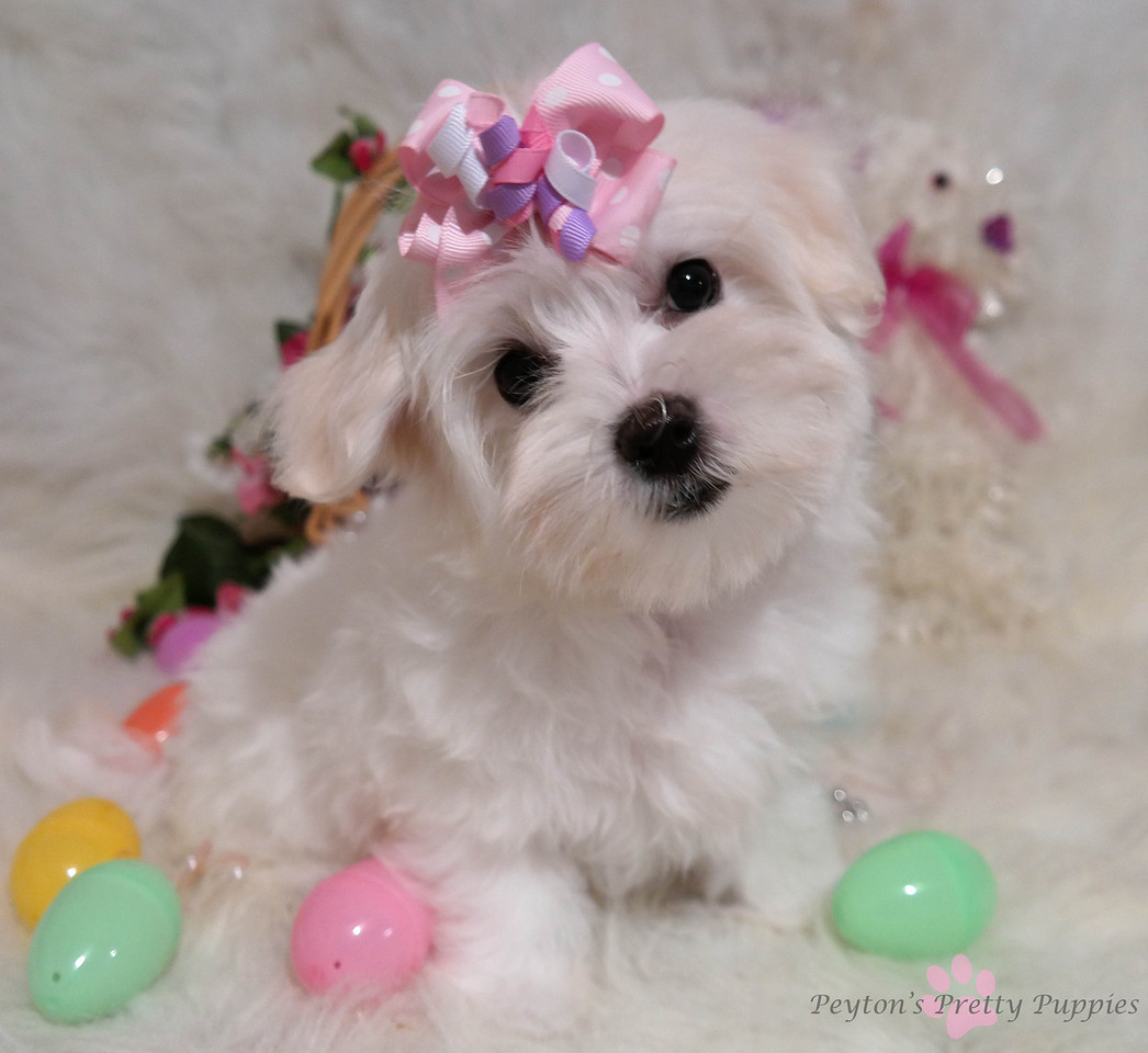 Tink<br /> <br /> Gender: Female<br /> Birthday: 12-20-13<br /> <br /> Little miss Tinkerbell brought her bubbly personality to her new family!