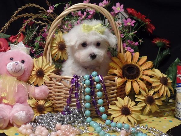 **  Daisy Mae **