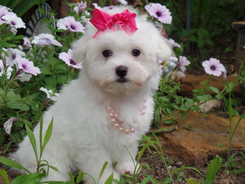 ** Sweet Lil Rose **