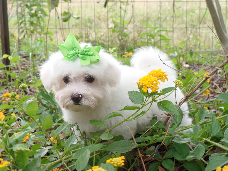 ** Tiny Dandelion **