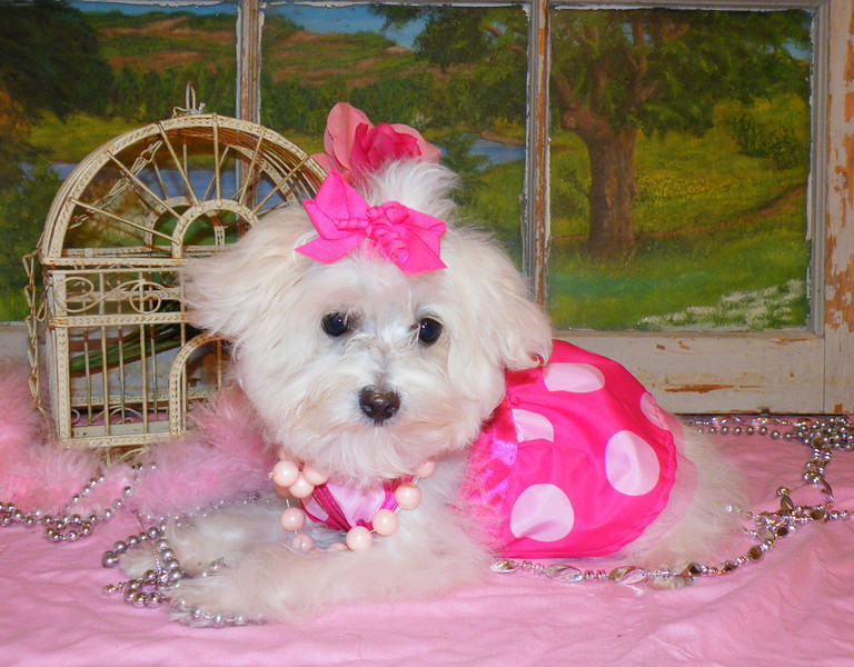Lilly Ann<br /> <br /> Gender: Female<br /> Birthday: 11-14-12<br /> <br /> Lilly Ann is living the good life in South Carolina!