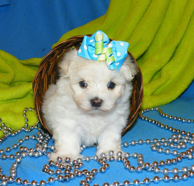 J.J<br /> <br />  Gender: Male<br />  Birthday:4-9-13<br />  <br /> Little J.Js new name is Cosmo, is bouncing around his new family's home!