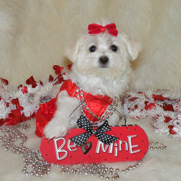 Janie<br /> <br /> Gender: Female<br /> Birthday: 11-14-12<br />  <br /> Janie is being pampered by her new family!