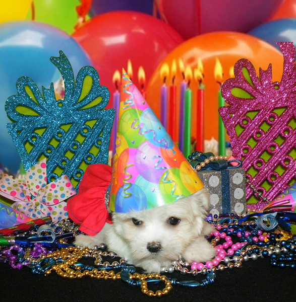Marcy <br /> <br /> Gender: Female<br /> Birthday: 11-20-12<br /> <br /> Marcy is living the good life with her new family!