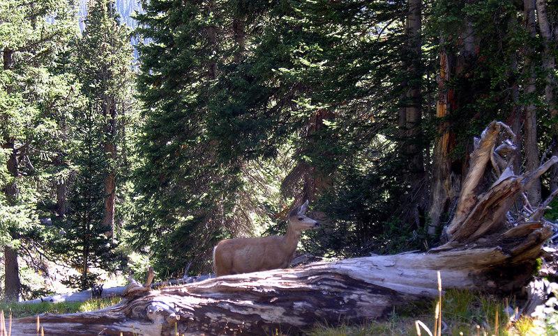 2006_8_Rocky_Mountain_National_Park (46)