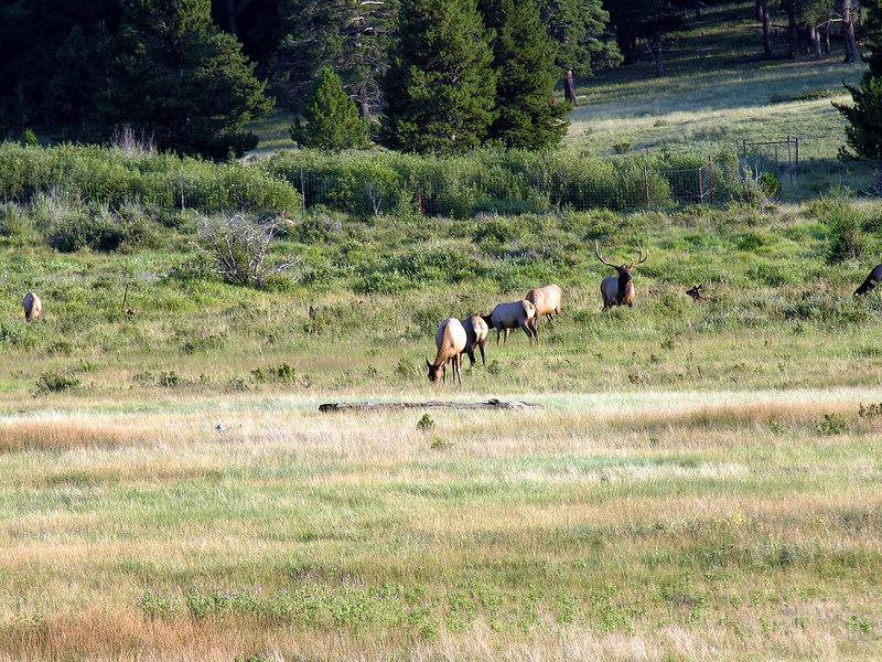 2006_8_Rocky_Mountain_National_Park (77)