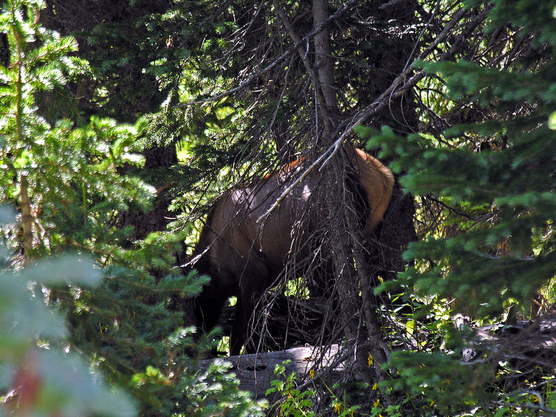 2006_8_Rocky_Mountain_National_Park (44)