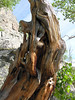 2006_8_Rocky_Mountain_National_Park (101)