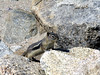 2006_8_Rocky_Mountain_National_Park (26)