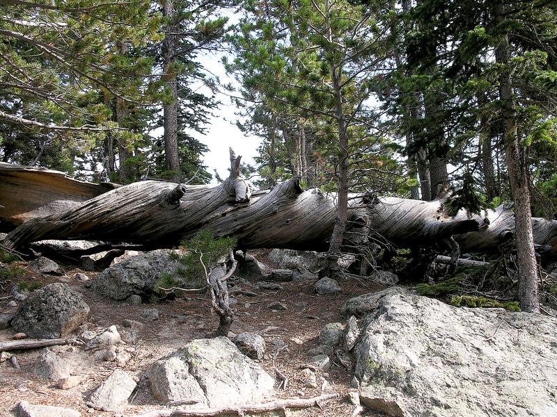 2006_8_Rocky_Mountain_National_Park (100)