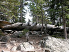 2006_8_Rocky_Mountain_National_Park (100)