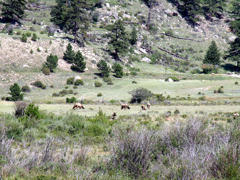 2006_8_Rocky_Mountain_National_Park (19)