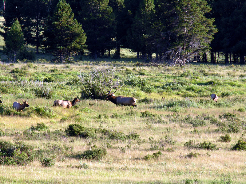 2006_8_Rocky_Mountain_National_Park (78)