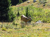 2006_8_Rocky_Mountain_National_Park (45)
