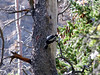 2006_8_Rocky_Mountain_National_Park (115)