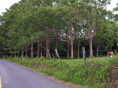 Road_Hana