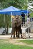 Rare Indiana elephant rides
