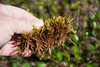 The ground was covered with this moss. It was like walking on carpet.