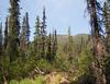 Along Grizzly Creek trail