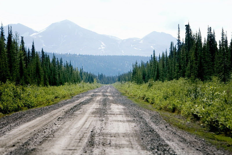 This is a typical Alaskan road, travelled while exploring the Denali Highway with our guide Heidi.