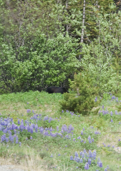 See the bear?