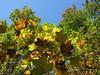 Fall_2006 (6)