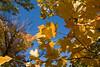 2007_Fall (90)