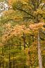 2007_Fall (29)