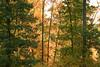 2007_Fall (24)