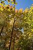 2007_Fall (99)