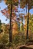 2007_Fall (76)
