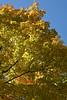 2007_Fall (97)