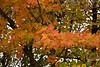 2007_Fall (2)