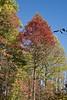 2007_Fall (101)