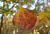 2007_Fall (93)