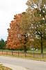 2007_Fall (91)