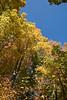 2007_Fall (98)