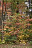 2007_Fall (44)