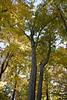 2007_Fall (105)