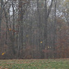 Major storms rolled through the Midwest on Tuesday October 26, 2010 spawning numerous tornadoes in northern Indiana. We had lots of wind and it rained leaves but thankfully no damage.