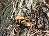 Fungi (77)