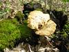 Fungi (80)