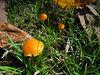Fungi (57)