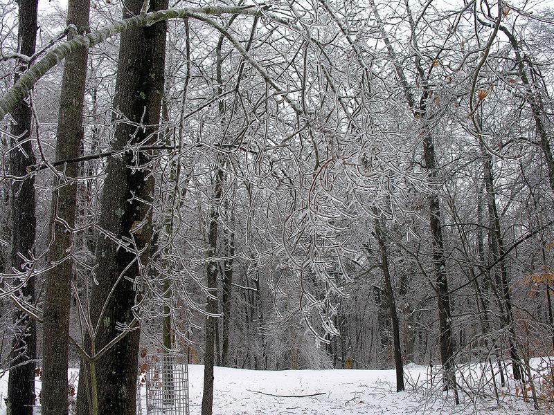 2007_2_13 Ice Storm (3)