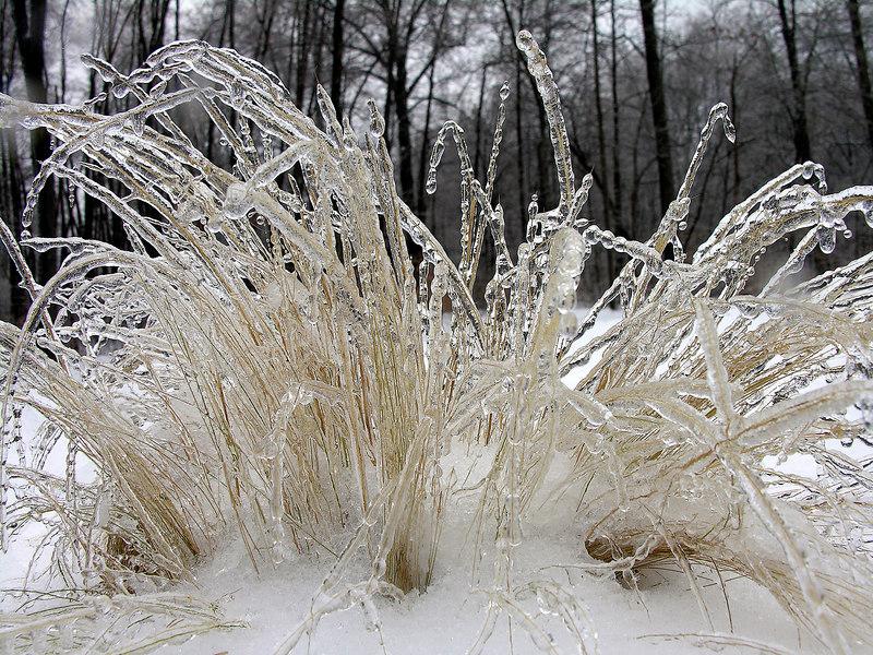 2007_2_13 Ice Storm (16)