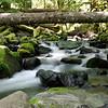 7-04-10<br /> <br /> A stream near the Clackamas River.