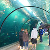 <b><i>Passages of the Deep</i> exhibit <br>Oregon Coast Aquarium</b> <br>Newport Oregon