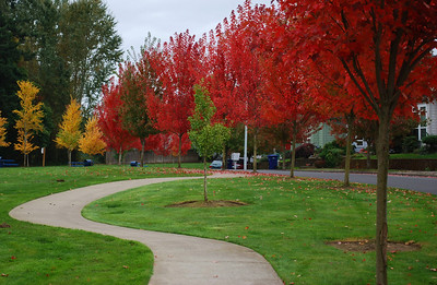 Neighborhood Park Fall Colors  Portland, Oregon