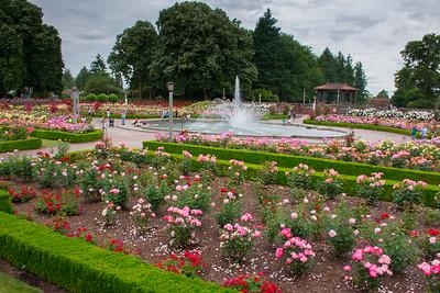 Rose Garden at Peninsula Park