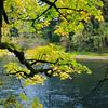 <b>Fall Colors </b><br><i>Clackamas River</i>